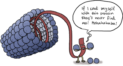 A cartoon of a viral genome hiding itself in a helical capsid.