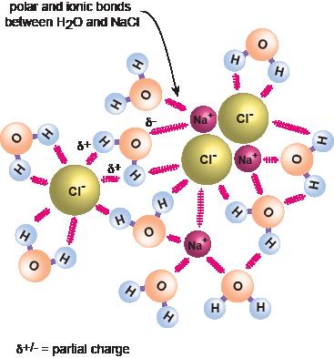 Biology Special Properties of Water - Shmoop Biology