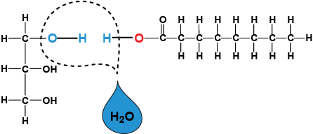 biology monomers polymers and dehydration synthesis shmoop biology : dehydration synthesis diagram - findchart.co