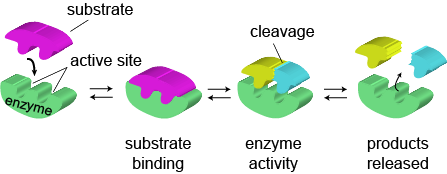 coenzymes and vitamins relationship goals