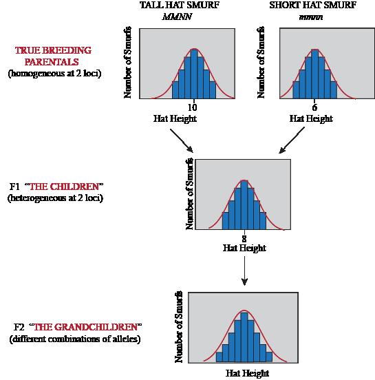 Biology Quantitative Genetics - Shmoop Biology