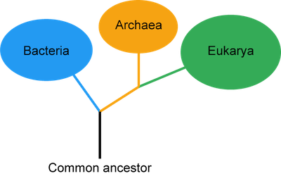 Unity and Diversity and Mechanisms of Evolution