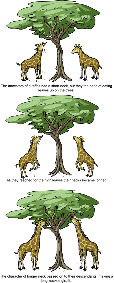 Biology Macroevolution Shmoop Biology