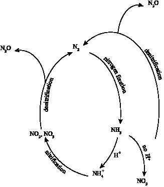 Chemistry Biogeochemical Cycles