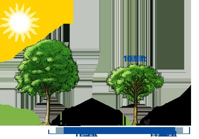 Figuras similares examples for Cuanto mide un arbol