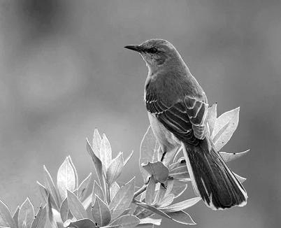 To Kill a Mockingbird Thesis