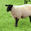 The Passionate Shepherd to His Love Summary