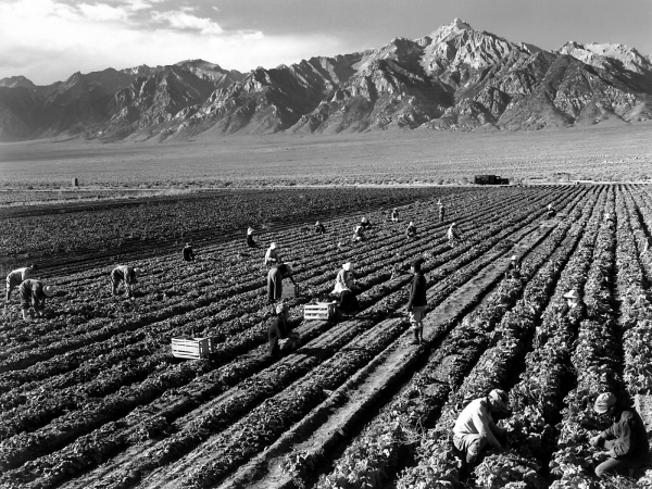 Workers at Manzanar