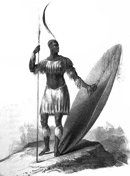 A drawing of an African warrior with a tall spear, grass skirt and should wrap, a gigantic shield, and a very tall feathered headdress.